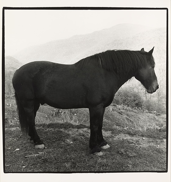 Black and white photograph of a horse on a mountainside
