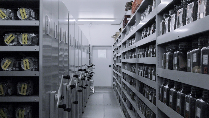 A shot from inside London's Millennium Seed Bank, in the 2018 video work The Ague by artist Pilar Mata Dupont