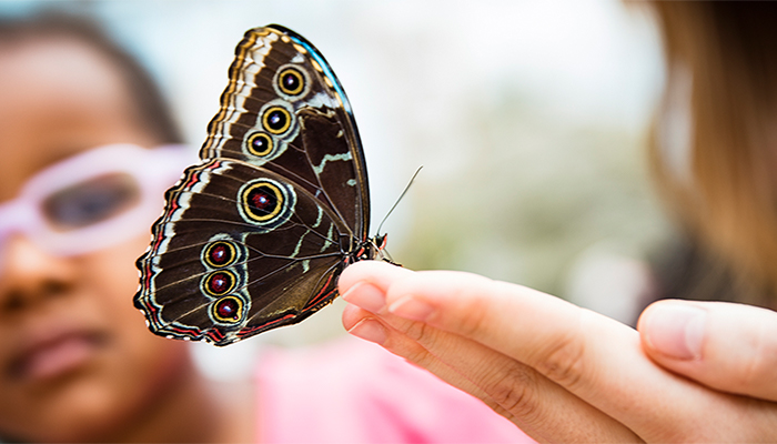 A butterfly rests on an outstretched hand as a little girl in pink framed glasses looks on in the background